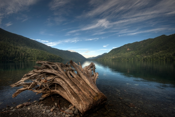 Lake Crescent Driftwood